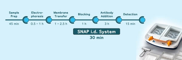SNAP id - Saves 3 Hours in your Western Blotting